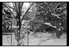 P61-2018-014 (lianefinch) Tags: argentique argentic analogique analog monochrome blackandwhite blackwhite bw noirblanc noiretblanc nb nature neige snow winter hiver white blanc noir garden jardin arceaux