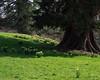 spring bouquets (Rourkeor) Tags: scotland unitedkingdom gb cumnock ayrshire dunfrieshouse daffodils shadows vibrant olympus omd em1mk2 12100mmpro mft
