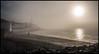 Rolling in (jbg06003) Tags: bowmore distillery beach mist fog dog