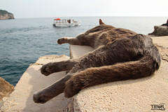 Cat nap (morbidtibor) Tags: kat cat kater poes pussycat kitten dubrovnik croatia