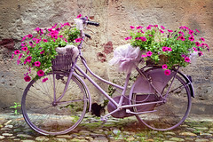 la bicicletta fiorita (C-Smooth) Tags: bici fiori finalborgo sv liguria bike bicicletta flowers finaleligure