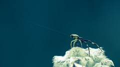 Talstation - Valley station (Of Light & Lenses) Tags: spider spiderthread spidersilk cablecar valleystation talstation spinne macro makro insect insectmacro spidermacro mzuiko2860mmmacro omdm1mkii