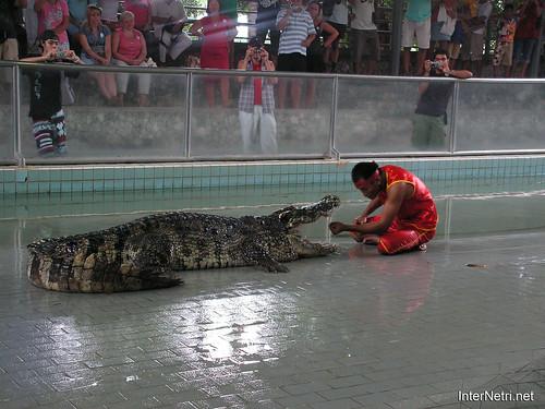 В пащу крокодилу Паттайя Таїланд Thailand InterNetri 23