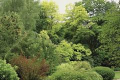 Shades of Green (Mr.LeeCP) Tags: seattle summer rainier beach gardens japanese