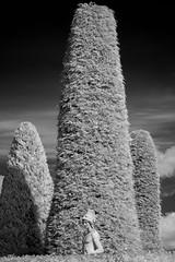 D7K_9336: Drummond Castle, Scotland in infrared (Colin McIntosh) Tags: drummondcastle infrared scotland nikon d7100 ir kolari 720nmfilter 85mm h f18 ais manualfocuslens