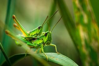 on grasshopper