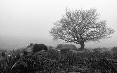 NB-3.jpg (neil.bulman) Tags: countryside longshawestate tree peakdistrict nature nationalpark derbyshire longshaw trees rocky rocks sheffield england unitedkingdom gb