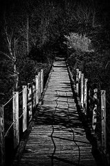 The Woods Are Lovely, Dark And Deep … (Mike Schaffner) Tags: audubon bw birdsanctuary blackwhite blackandwhite boardwalk boyscoutwoodssanctuary forest monochrome path sanctuary walkway woods bolivarpeninsula texas unitedstates us high island