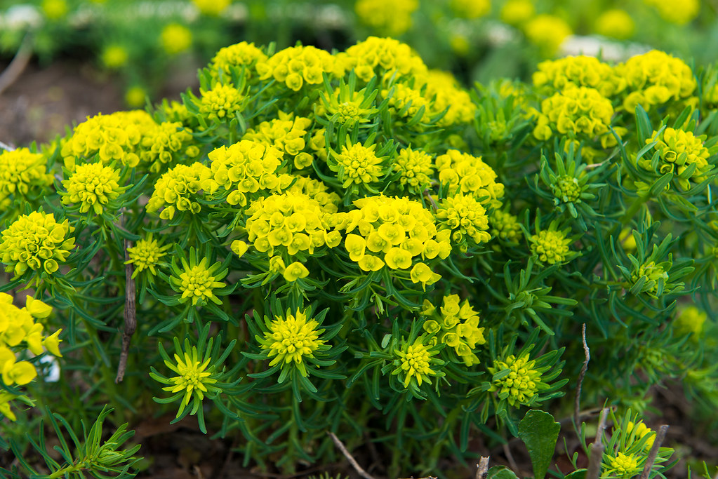 фото: Жёлто-зелёное