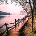 Nami Island - South Korea - Travel photography