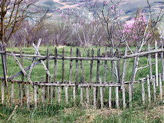 old designer fence (uiriidolgalev) Tags: old designer fence