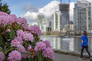 Rhododendrons On The Run