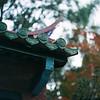 Confucious Temple Taipei (jasoncremephotography) Tags: hasselblad 203fe hasselblad203fe film analog fujifilm fujicolor 160ns taipei taiwan