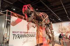 180324 Washington-15.jpg (Bruce Batten) Tags: shadows usa museums trips occasions people subjects reptiles locations animals vertebrates businessresearchtrips washingtondc dinosaurs washington districtofcolumbia unitedstates us