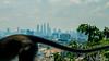 Monkey Bomb (skweeky ツ) Tags: kuala lumpur kl malaysia malaisie buta caves monkey petronas towers city downtown