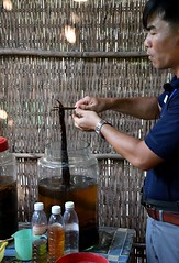 Demontrating the making of Snake and/or Scorpion Wine in Vietnam. (One more shot Rog) Tags: vietnam vietnamese cambodia mekong snake snakes snakewine caibe wines wine cobra cobrawine bite alcahol strong jars jar glass shopping unusual horrible taste mekongriver onemoreshotrog scorpion scorpionwine smakeandscorpionwine winetasting