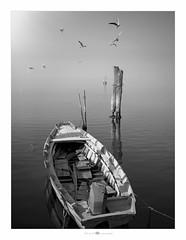 (paolo paccagnella) Tags: phpph© 2018 paccagnellapaolo territorio veneto ambiente acqua aquae landscape seascape boat bn bw blackandwhite flickr foto photo eos5dm3 canon fog lakescape monochrome minimalism minimal