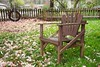 In the yard - HBM! (JSB PHOTOGRAPHS) Tags: jsb2884 benchmonday bench yard seat nikon d3 28300mm fence tree swing