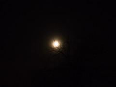 Phantom moon (Alexander-_-Laz) Tags: night black sky dark haze dim light tree branch twig grid through gloom silhouette