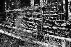 6Q3A6464 (www.ilkkajukarainen.fi) Tags: blackandwhite mustavalkoinen suomi suomi100 espoo finland finlande happy life visit travel traveling travelworld nature luonto suomenoja eu europa scandinavia spring kevät