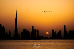 ~ City of Gold ~ (Chirag Khatri) Tags: nikon npm tamron tamron70200g2 mydubai dxb visitdubai appicoftheweek downtowndubai sunset landscape cityscape burjkhalifa nikonmea khaleejtimes nikonnofilter timeoutdubai downtown sky birds orange water waterscape nikond850 outdoor harbor gold black unique nature uae