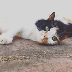 Katya (rjmiller1807) Tags: stellenbosch westerncape cat kitty katya katte meow tortoiseshell iphone iphonography iphonese eyes cute sweet southafrica 2017 december