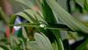 Der Wassertropfen (dl1ydn) Tags: dl1ydn wassertropfen blätter pflanzen waterdrop leaves garden garten nature