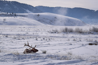 National Elk Refuge, Jackson Hole, WY