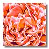 RHS FLOWERSHOW CARDIFF (Andre Van de Sande) Tags: flowershow flower flowers rhs cardiff wales