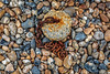 Anchor point on Worthing beach (PhredKH) Tags: 2470mm beach canonphotography coastalbritain ef2470mmf4lisusm fredkh photosbyphredkh phredkh southcoast splendid worthing chain concrete outdoor outdoorphotography pepples post rusty rustychain stones food macro canoneos5dmkiii