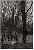 Dernier soleil d'hiver (Jean-Marie Lison) Tags: eos80d sigmaart bruxelles berchemsainteagathe