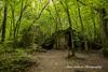 Wolf's Lair, Poland (Anna Calvert Photography) Tags: poland polska forest trees nature landscape wolf'slair hitlers lair nazi bunkers secondworldwar german gierloz ketrzyn