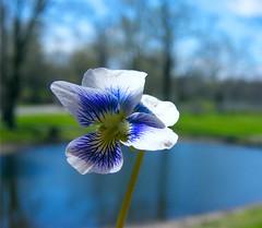 The Flower and the Lake (Stanley Zimny (Thank You for 31 Million views)) Tags: flower botanical garden skylands nj lake dof