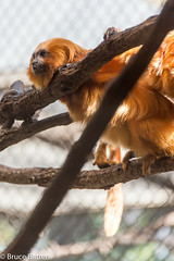 180323 National Zoological Park-05.jpg (Bruce Batten) Tags: locations terrestrial mammals trips occasions zoos subjects reflections nationalzoologicalpark animals vertebrates businessresearchtrips washingtondc usa washington districtofcolumbia unitedstates us