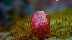 Happy Easter (YᗩSᗰIᘉᗴ HᗴᘉS +14 000 000 thx) Tags: easter happyeaster hensyasmine namur belgium europa aaa namuroise look photo friends be wow yasminehens interest intersting eu fr greatphotographers lanamuroise