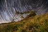 World That I can See (Emerald Imaging Photography) Tags: garie gariebeach royalnationalpark sydney nsw newsouthwales australia australian australianbush australianlandscape trees tree hill stars startrails sunrise landscape