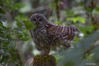 Owl stretch