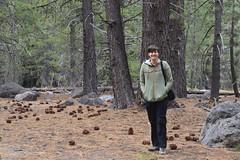 Lassen Volcanic Park (Jess (on a plane)) Tags: day15 california usa holiday 2018 roadtrip camping lassenvolcanicpark lassen morgan