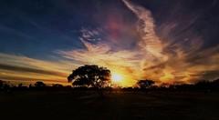 BRASÍLIA - Sunset (sileneandrade10) Tags: sileneandrade pôrdosol sunset nikon