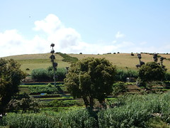 Stork Condo, Chellah (Mulligan Stu) Tags: condos cigogne phoenician laclac maroc morocco berber rabat marinid stork romanruins almohad phoenicianruins roman chellah