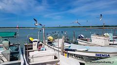 Rio Lagartos-Yucatan-Mexico (johnfranky_t) Tags: rio lagartos johnfranky t samswung s7 barche gabbiani acqua nuvole motori pali mare golfo del messico mexico cielo