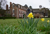 Wet Daffs on a grey day (Mister Oy) Tags: ruffordoldhall daffodils flowers yellow dof fujixe2 fuji1855mm low nationaltrust plant building statelyhome rufford grass lawn spring