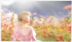 La merveille du soleil (Olivia Lalonde | Le Poppycock) Tags: tetra lepoppycock yumyum theskinnery halfdeer