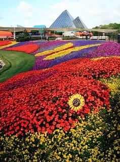 Festival Blooms