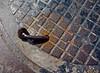 Manhole Abstract (ricko) Tags: manhole bolt bent cover