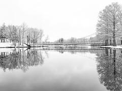April Snow (mjhedge) Tags: snow april lakeofthewoods lake bridge illinois olympus getolympus oly omdem1mkii em1mkiiomdem1markii omd 12100mmf4 12100mm mzuiko12100mmf4pro water blackandwhite blackwhite bw monochrome