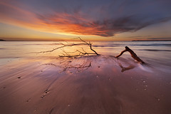 Same branch, different day (Louise Denton) Tags: driftwood branch stick beach sea oceanb water sunset longexposure darwin mindilbeach nt northernterritory australia