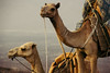 just the two of us (rick.onorato) Tags: africa ethiopia erta ale camels trek