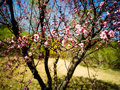 Early Spring (J. F. Kr) Tags: hasselblad hasselbladx1d xcd30 beijing spring