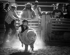 024693763299-97-Cowboy Mutton Busting at the Clark County Fair and Rodeo-2-Black and white (Jim There's things half in shadow and in light) Tags: 2018 america april clarkcountyfairandrodeo mojave muttonbusting nevada rodeo southwest usa animal child desert kid sheep sports cowboy blackandwhite